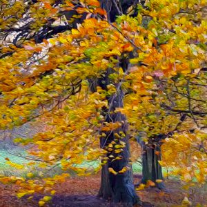 Autumn Trees by Andrea Palmer